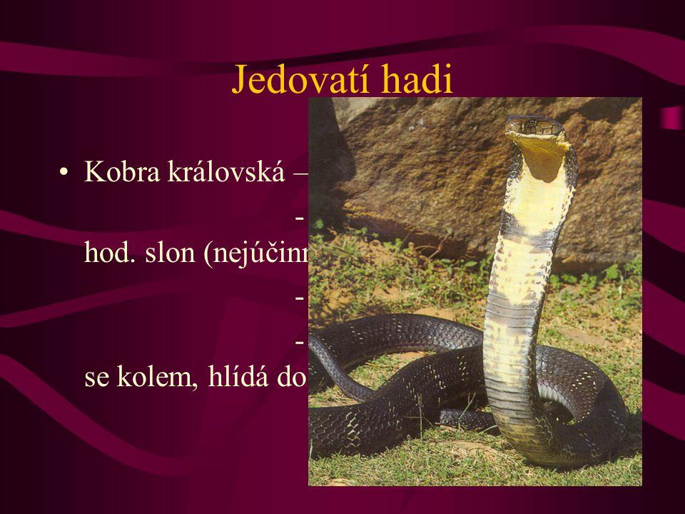 Jedovatí hadi Kobra královská – 4 –5 m, JV Asie - jed : 15 min. člověk, 3 hod. slon (nejúčinnější jed 0,3mg/kg) - kořistí hlavně jiní hadi - vajíčka d