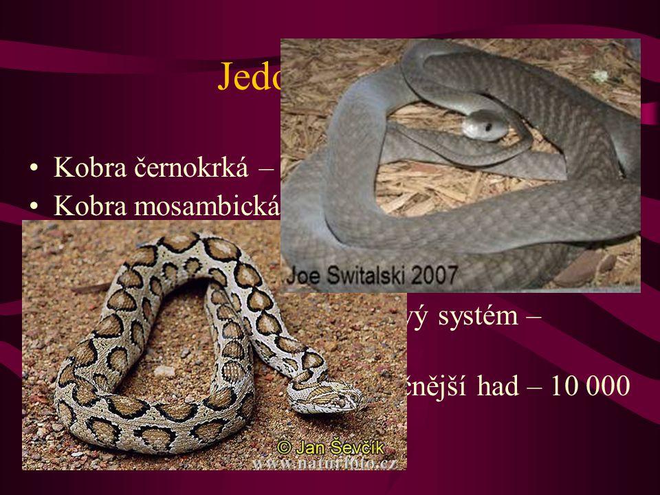 Jedovatí hadi Kobra černokrká – plive do vzdálenosti 3 m Kobra mosambická – přesně zasáhne na 3 m oči člověka Mamba – nejrychlejší had – vlní se 14-19