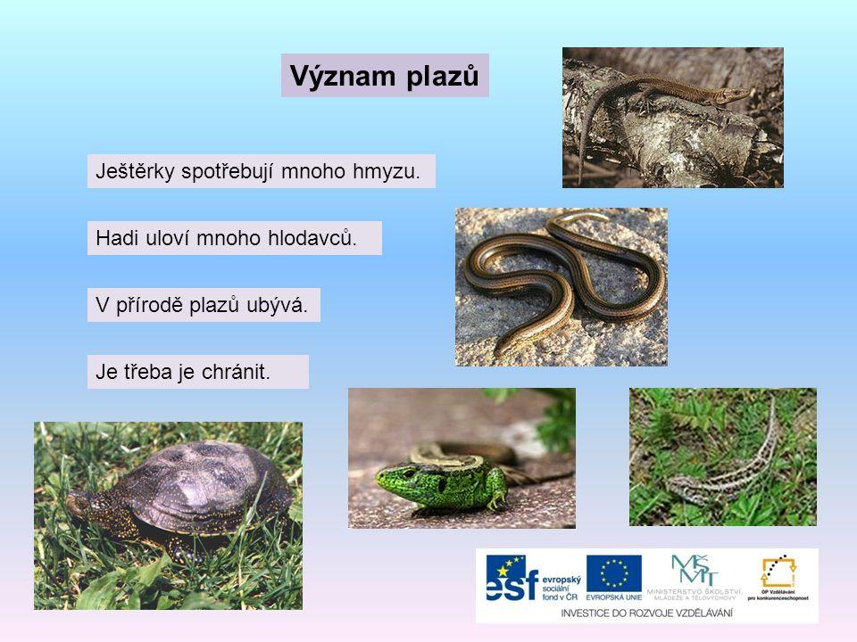 Význam plazů Ještěrky spotřebují mnoho hmyzu. Hadi uloví mnoho hlodavců. V přírodě plazů ubývá. Je třeba je chránit.