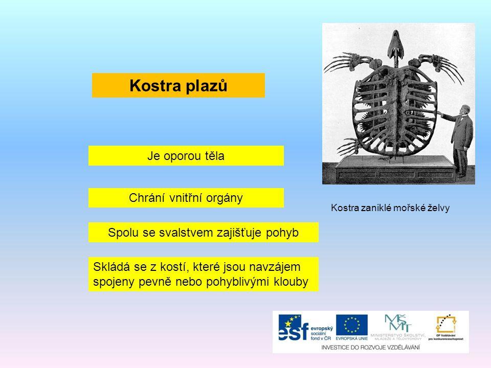 Páteř složená z obratlů Kostra hrudníku Kostra končetin (pouze u ještěrek a želv, hadi končetiny nemají) Hlavní části kostry