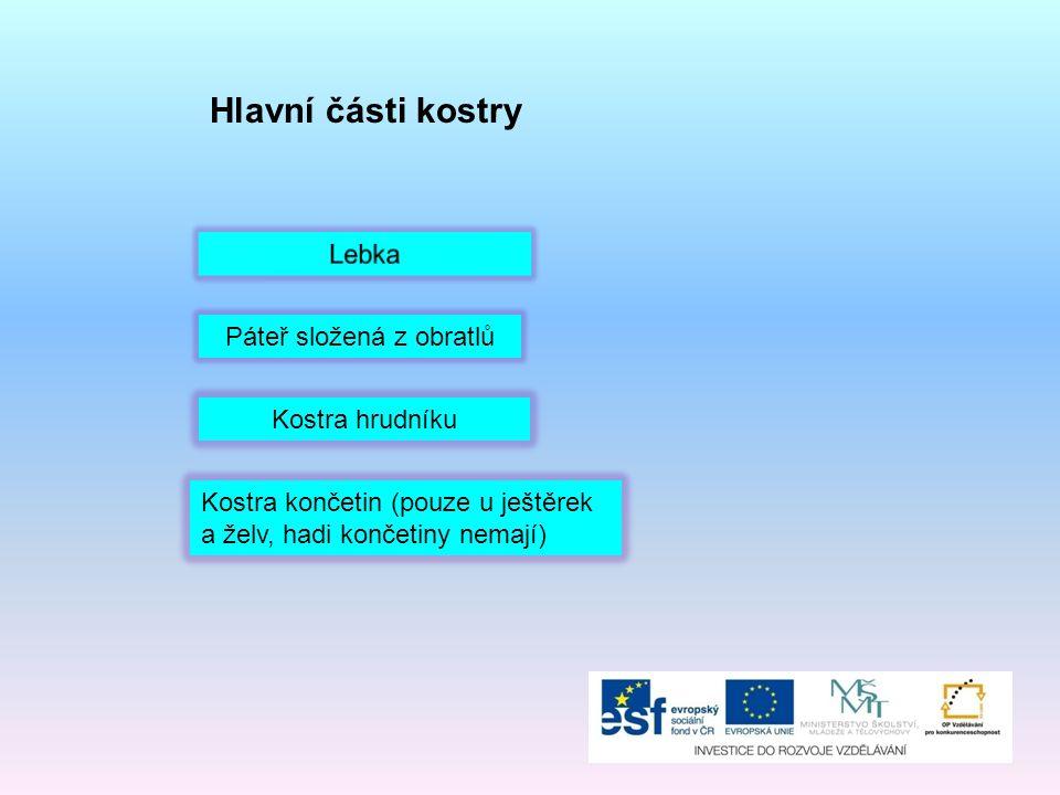 Vnitřní ústrojí plazů Oběhové ústrojí Dýchací ústrojí (plíce) Trávicí ústrojí Vylučovací ústrojí Rozmnožovací ústrojí Nervové ústrojí Smysly