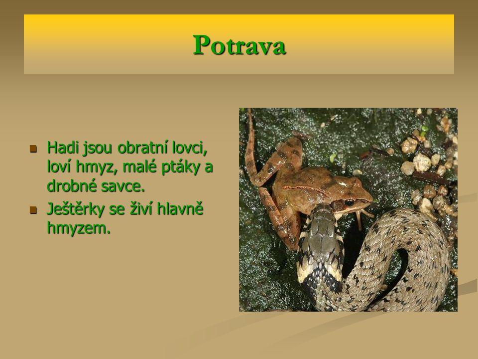 Význam Plazi spotřebují mnoho hmyzu (ještěrky) i hlodavců (hadi).