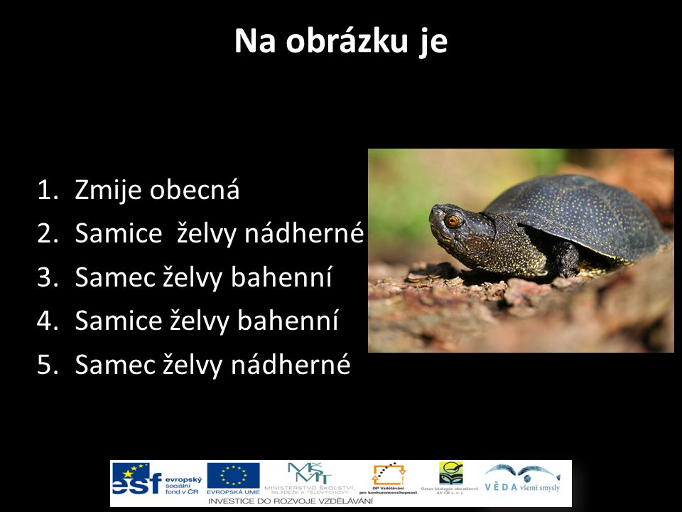 Na obrázku je 1.Zmije obecná 2.Samice želvy nádherné 3.Samec želvy bahenní 4.Samice želvy bahenní 5.Samec želvy nádherné