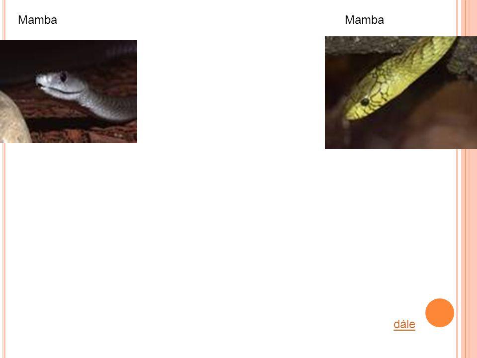 dále Mamba