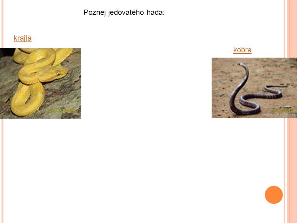 Poznej jedovatého hada: krajta kobra