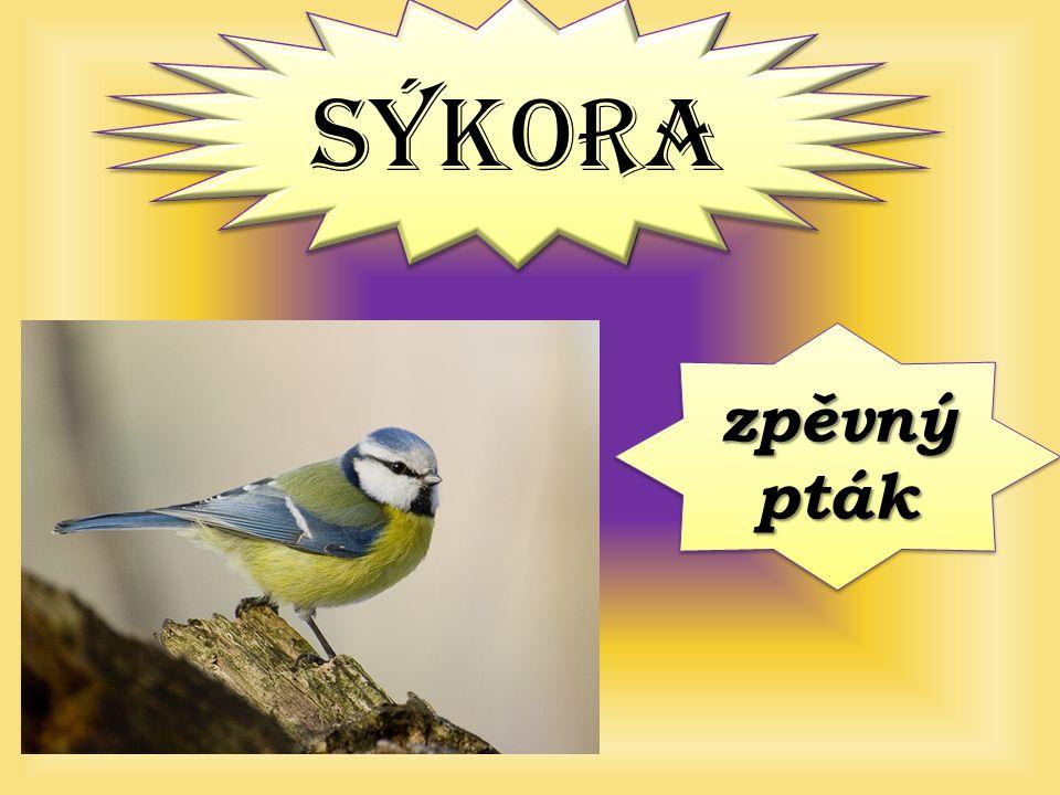 SÝKORA zpěvný pták