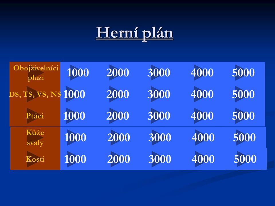 Herní plán Obojživelníci plazi 2000 50004000 5000 30001000 40003000 2000 DS, TS, VS, NS 20004000 1000 5000 40002000 100030005000 3000 2000300010004000 Ptáci Kůže svaly Kosti