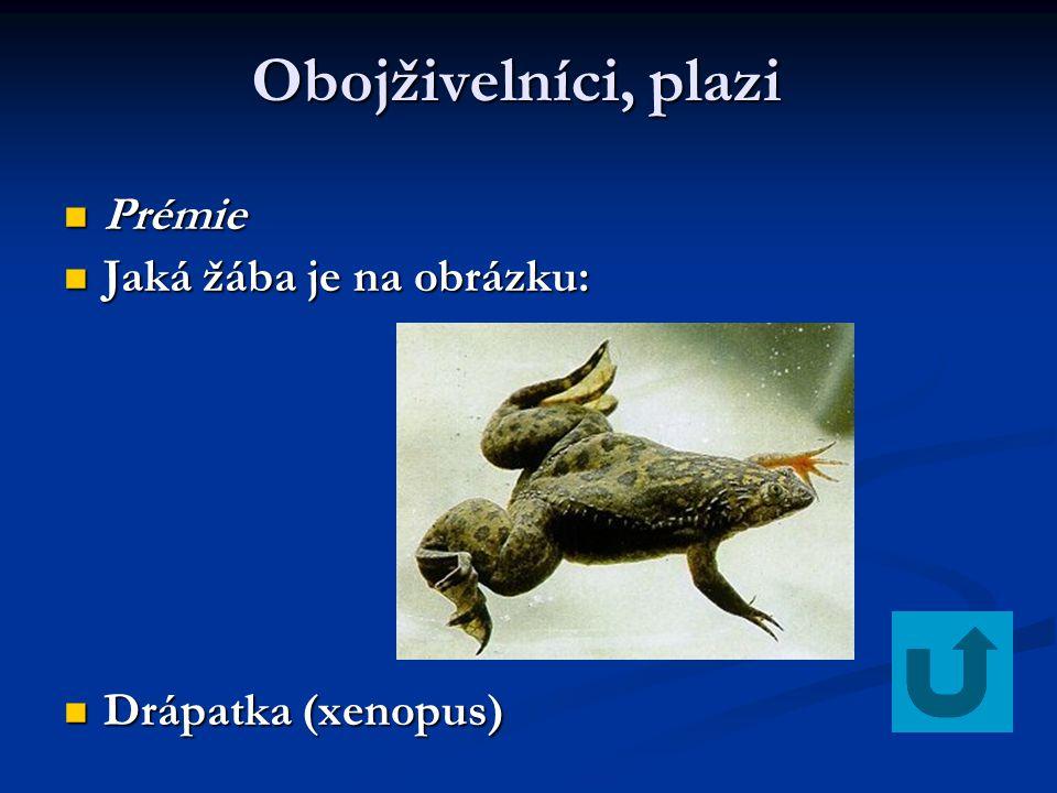 Obojživelníci, plazi Obojživelníci, plazi Prémie Prémie Jaká žába je na obrázku: Jaká žába je na obrázku: Drápatka (xenopus) Drápatka (xenopus)