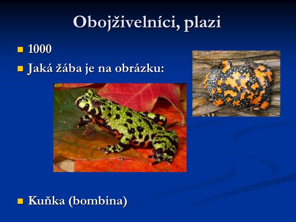 Obojživelníci, plazi 1000 1000 Jaká žába je na obrázku: Jaká žába je na obrázku: Kuňka (bombina) Kuňka (bombina)