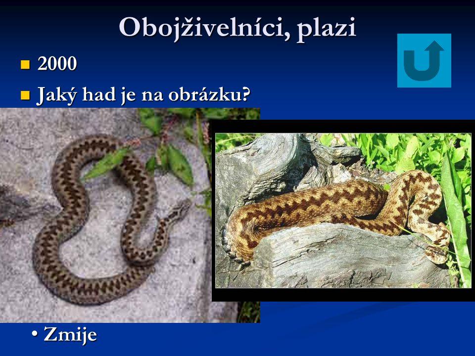 Obojživelníci, plazi 2000 2000 Jaký had je na obrázku? Jaký had je na obrázku? Zmije Zmije