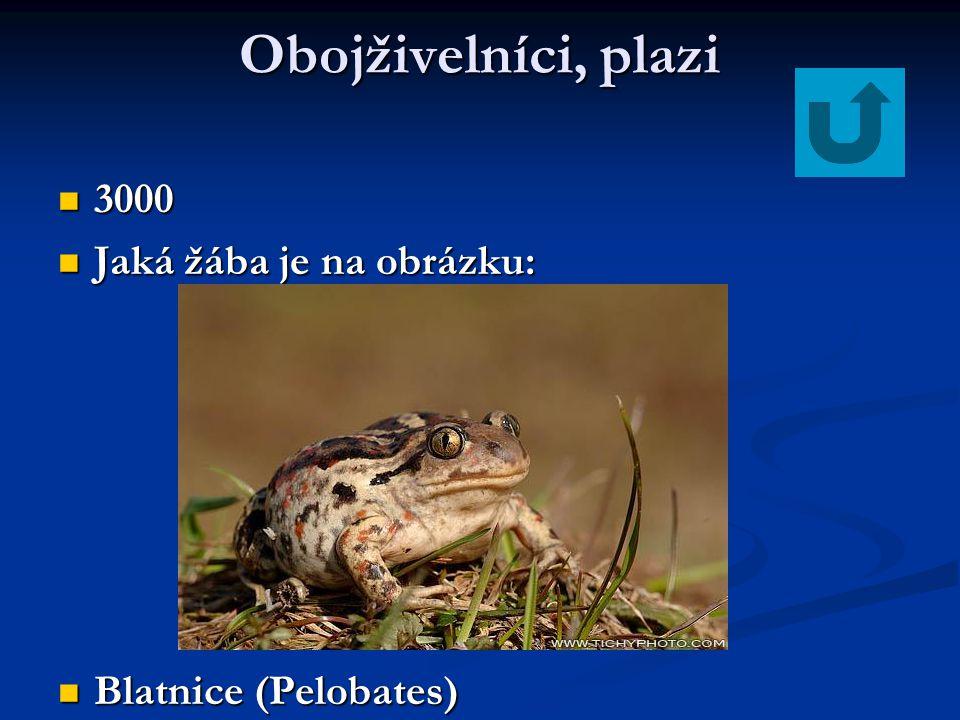 Obojživelníci, plazi 3000 3000 Jaká žába je na obrázku: Jaká žába je na obrázku: Blatnice (Pelobates) Blatnice (Pelobates)