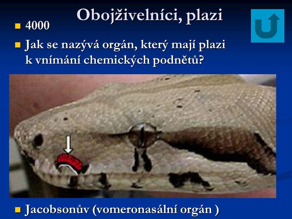 Ptáci 2000 2000 Jak se jmenuje Jak se jmenuje pták na obrázku? Strakapoud Strakapoud
