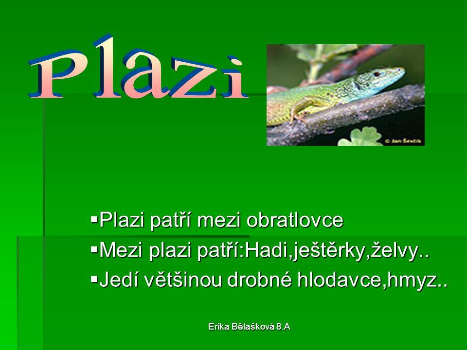 Erika Bělašková 8.A  Plazi patří mezi obratlovce  Mezi plazi patří:Hadi,ještěrky,želvy..  Jedí většinou drobné hlodavce,hmyz..