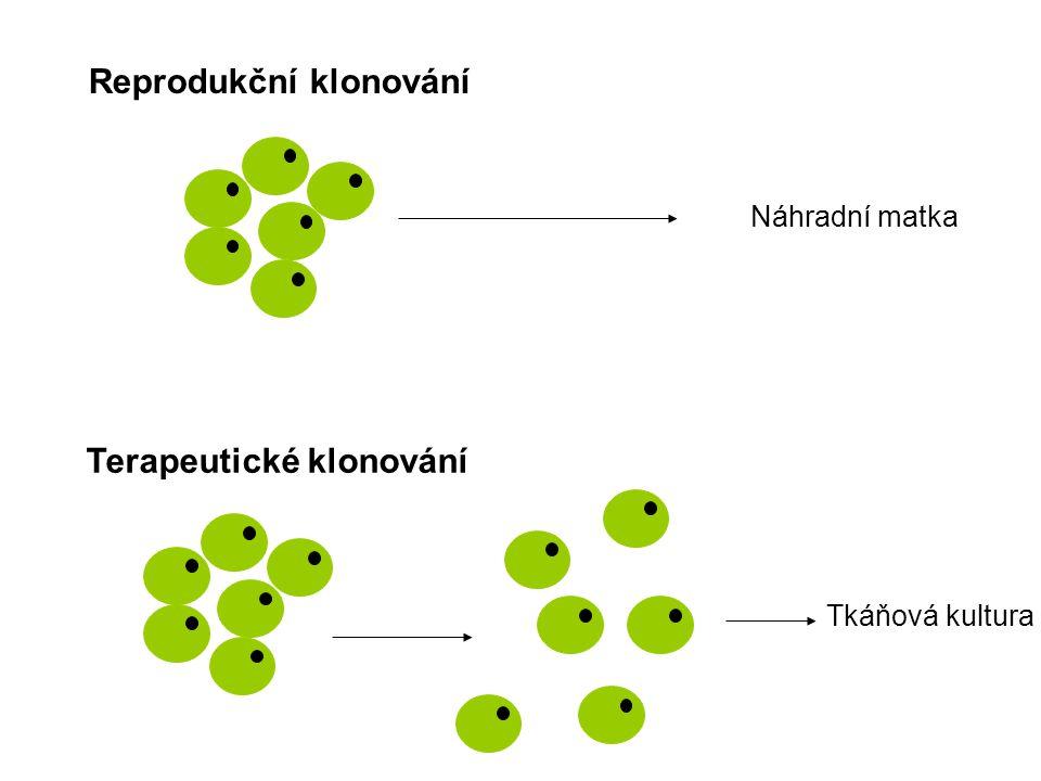 Náhradní matka Tkáňová kultura Reprodukční klonování Terapeutické klonování