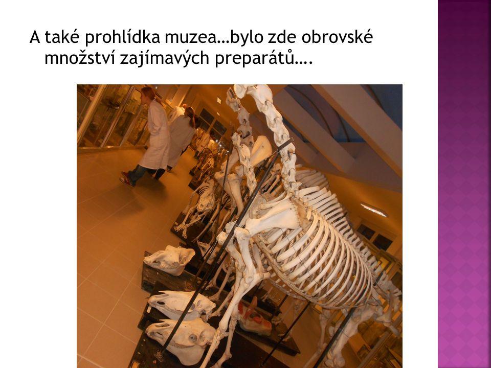 A také prohlídka muzea…bylo zde obrovské množství zajímavých preparátů….