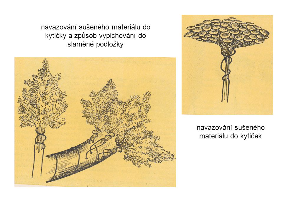 Opakování Dušičky, nebo-li Památka zesnulých se slaví 2.listopadu věnce a věnečky: šiškový staticový slaměnkový zelený lesní mechový šiškový věnec – vypichujeme do podložky - šišky Pinus sylvestris navazujeme na drát - šišky Larix decidua – lze lepit tavnou pistolí staticový věnec – vypichujeme do podložky - navázané kytičky na dvě nožky - Limonium sinnuatum - Goniolimon tataricum