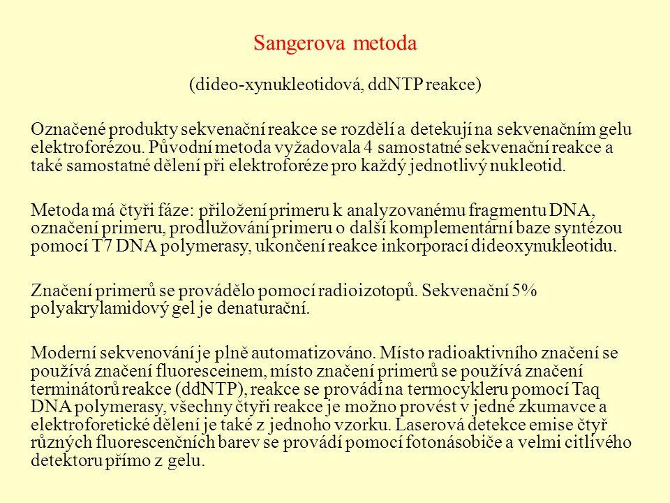 Sangerova metoda (dideo-xynukleotidová, ddNTP reakce) Označené produkty sekvenační reakce se rozdělí a detekují na sekvenačním gelu elektroforézou. Pů