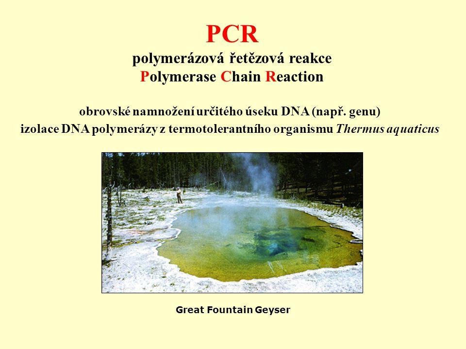 obrovské namnožení určitého úseku DNA (např. genu) izolace DNA polymerázy z termotolerantního organismu Thermus aquaticus Great Fountain Geyser PCR po