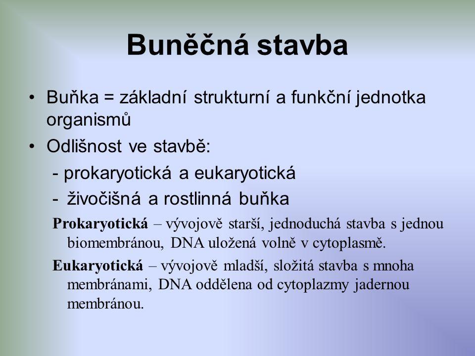 Buněčná stavba Buňka = základní strukturní a funkční jednotka organismů Odlišnost ve stavbě: - prokaryotická a eukaryotická -živočišná a rostlinná buň