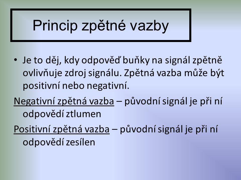 Princip zpětné vazby Je to děj, kdy odpověď buňky na signál zpětně ovlivňuje zdroj signálu. Zpětná vazba může být positivní nebo negativní. Negativní