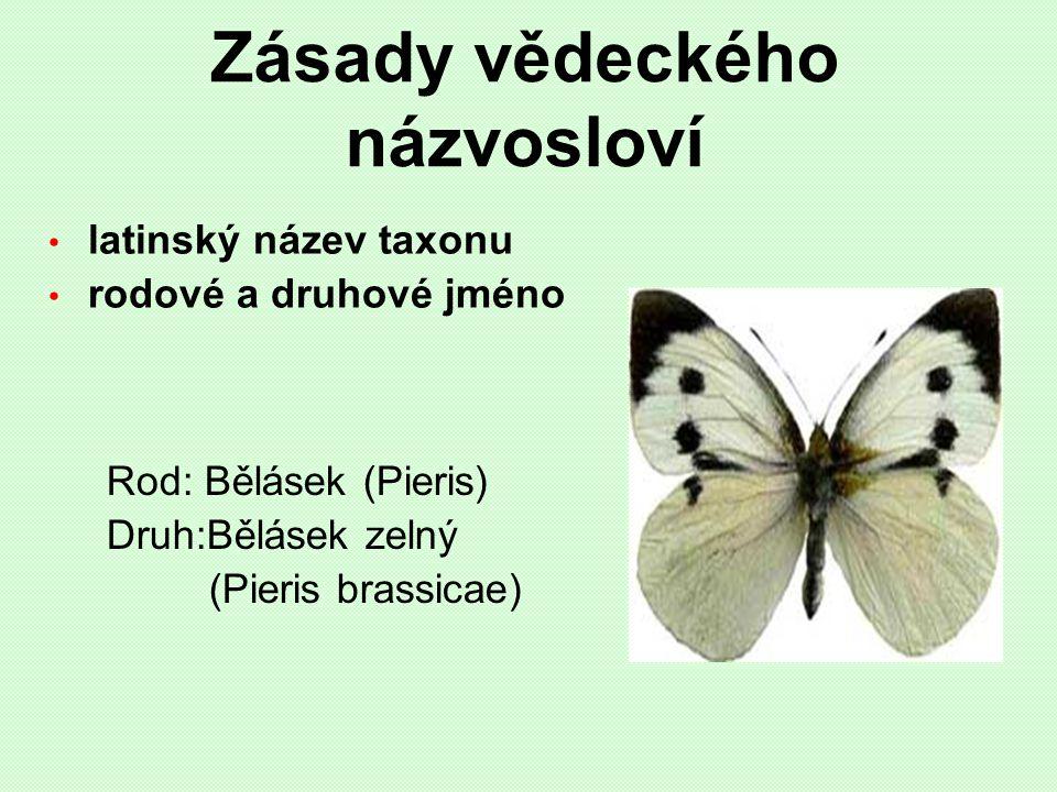Zásady vědeckého názvosloví latinský název taxonu rodové a druhové jméno Rod: Bělásek (Pieris) Druh:Bělásek zelný (Pieris brassicae)
