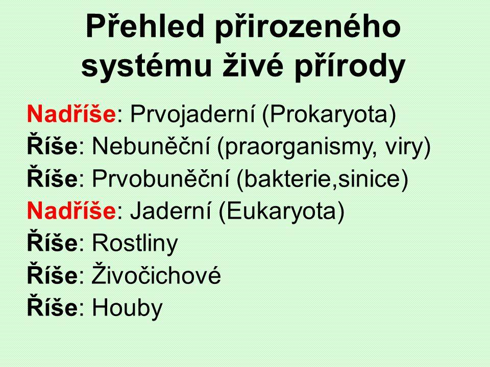 Přehled přirozeného systému živé přírody Nadříše: Prvojaderní (Prokaryota) Říše: Nebuněční (praorganismy, viry) Říše: Prvobuněční (bakterie,sinice) Na