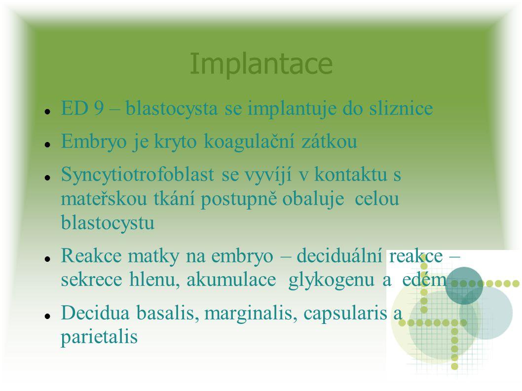 Implantace ED 9 – blastocysta se implantuje do sliznice Embryo je kryto koagulační zátkou Syncytiotrofoblast se vyvíjí v kontaktu s mateřskou tkání po