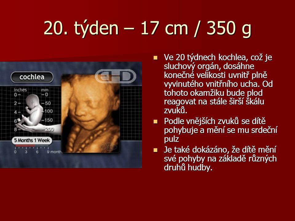 20. týden – 17 cm / 350 g Ve 20 týdnech kochlea, což je sluchový orgán, dosáhne konečné velikosti uvnitř plně vyvinutého vnitřního ucha. Od tohoto oka