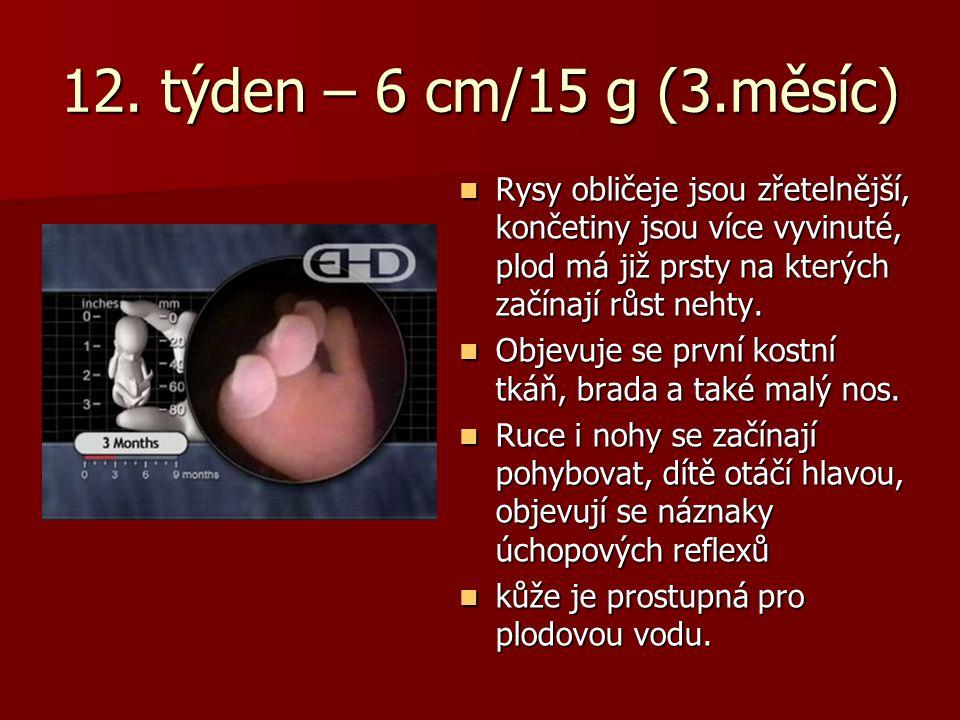 12. týden – 6 cm/15 g (3.měsíc) Rysy obličeje jsou zřetelnější, končetiny jsou více vyvinuté, plod má již prsty na kterých začínají růst nehty. Rysy o