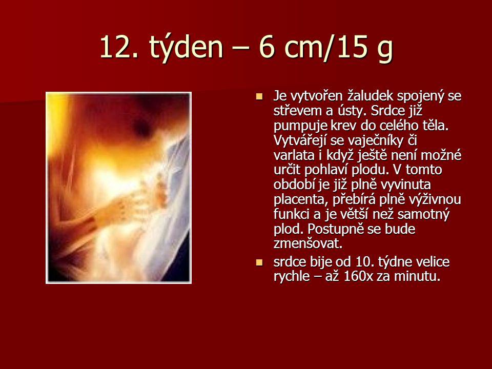 12. týden – 6 cm/15 g Je vytvořen žaludek spojený se střevem a ústy. Srdce již pumpuje krev do celého těla. Vytvářejí se vaječníky či varlata i když j