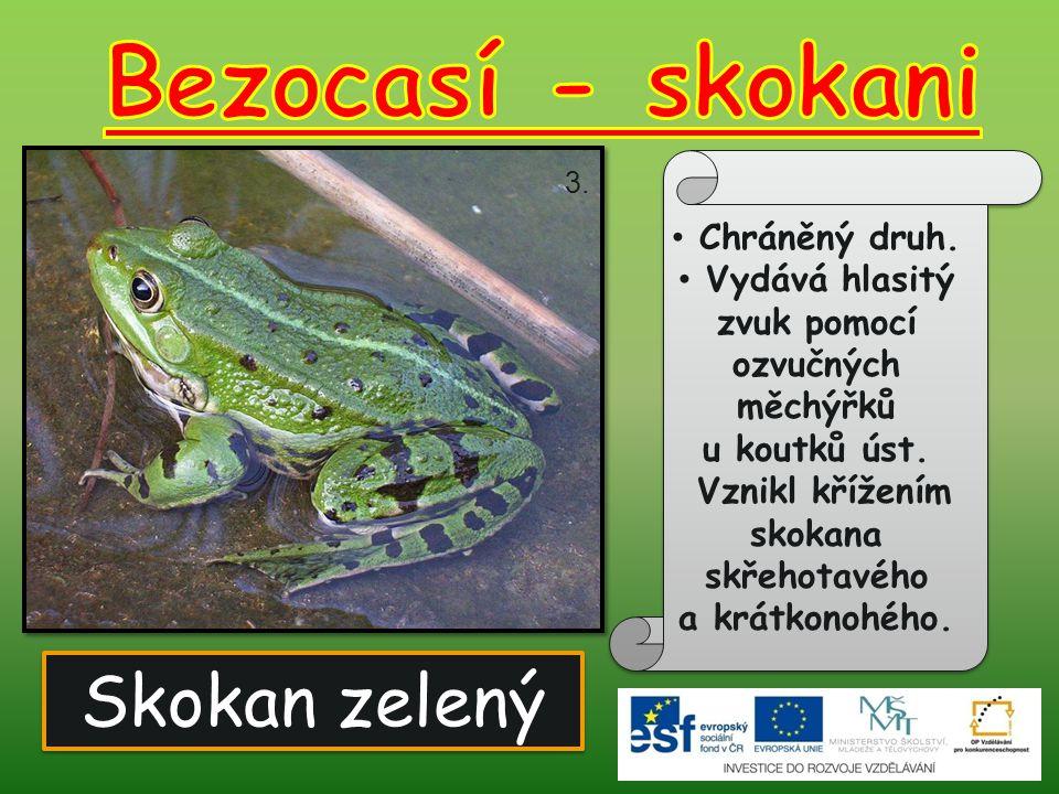 Skokan zelený Chráněný druh. Vydává hlasitý zvuk pomocí ozvučných měchýřků u koutků úst. Vznikl křížením skokana skřehotavého a krátkonohého. 3.