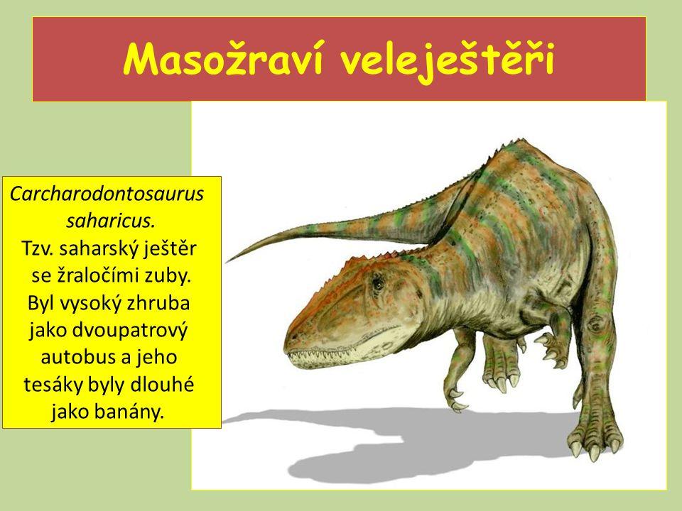 Masožraví veleještěři Carcharodontosaurus saharicus.