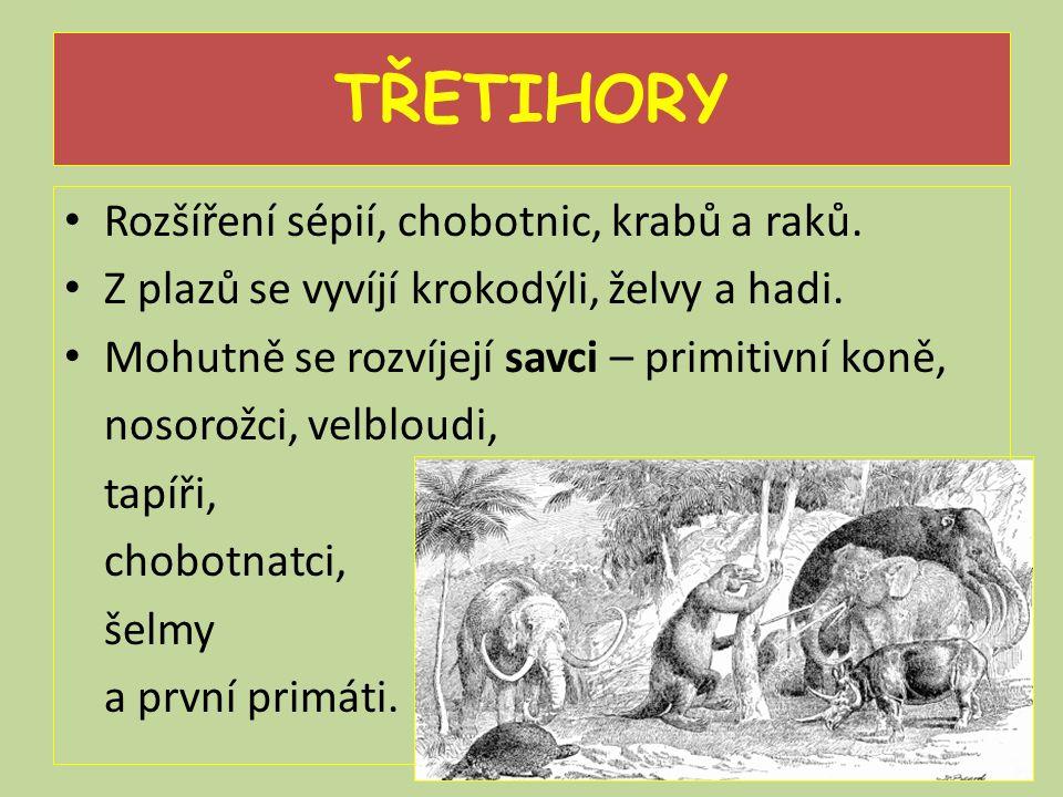 TŘETIHORY Rozšíření sépií, chobotnic, krabů a raků. Z plazů se vyvíjí krokodýli, želvy a hadi. Mohutně se rozvíjejí savci – primitivní koně, nosorožci