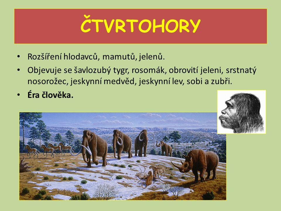 ČTVRTOHORY Rozšíření hlodavců, mamutů, jelenů. Objevuje se šavlozubý tygr, rosomák, obrovití jeleni, srstnatý nosorožec, jeskynní medvěd, jeskynní lev