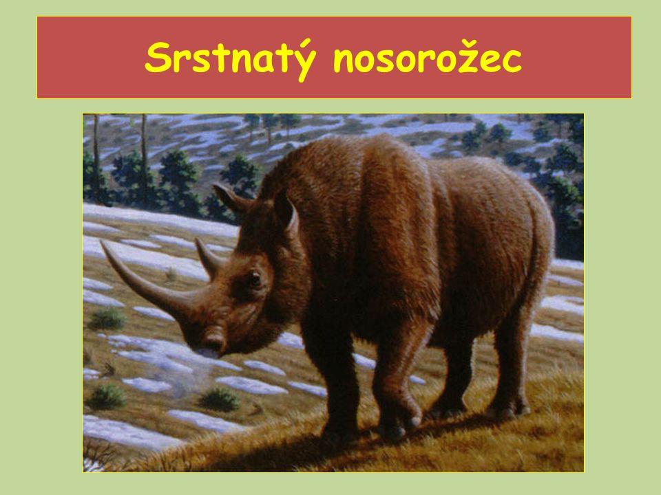Srstnatý nosorožec