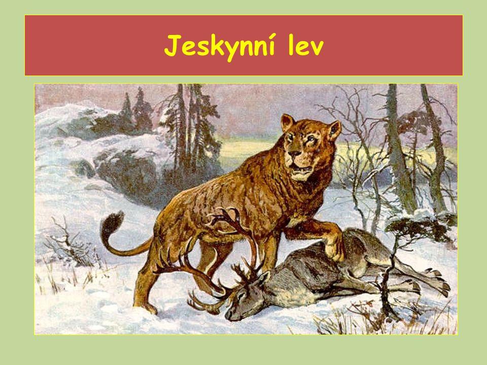 Jeskynní lev