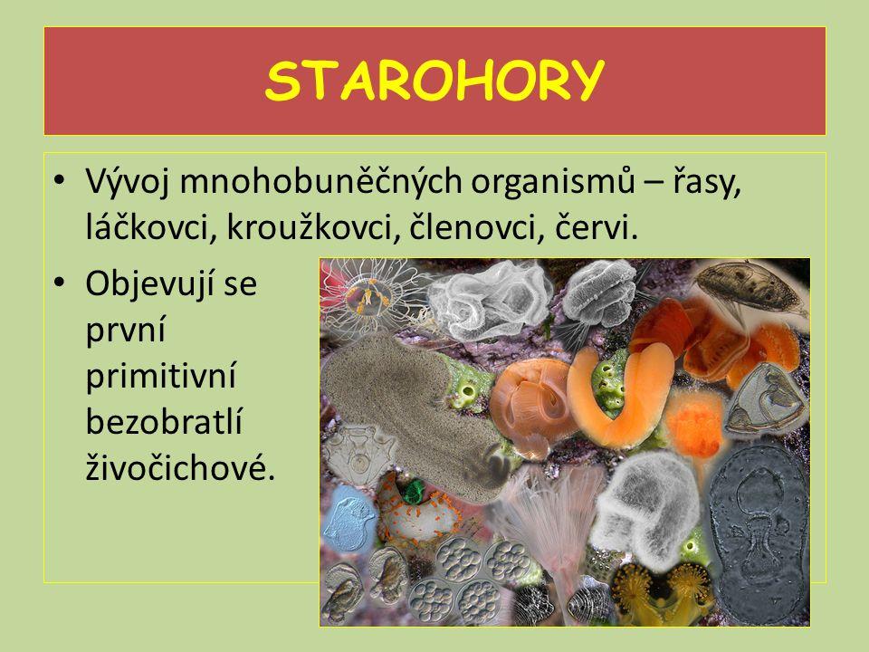 STAROHORY Vývoj mnohobuněčných organismů – řasy, láčkovci, kroužkovci, členovci, červi. Objevují se první primitivní bezobratlí živočichové.
