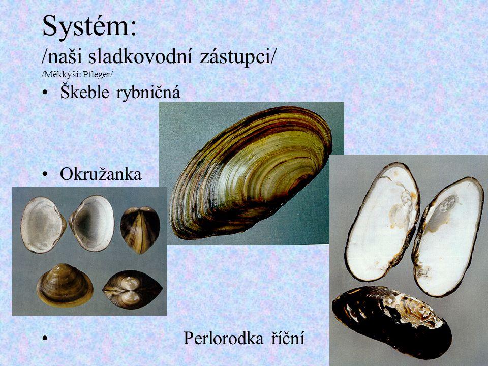 Systém: /naši sladkovodní zástupci/ /Měkkýši: Pfleger/ Škeble rybničná Okružanka Perlorodka říční