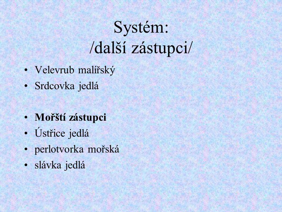 Systém: /další zástupci/ Velevrub malířský Srdcovka jedlá Mořští zástupci Ústřice jedlá perlotvorka mořská slávka jedlá