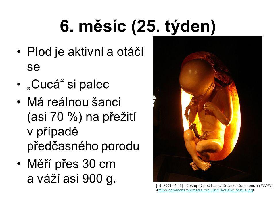 """6. měsíc (25. týden) Plod je aktivní a otáčí se """"Cucá"""" si palec Má reálnou šanci (asi 70 %) na přežití v případě předčasného porodu Měří přes 30 cm a"""