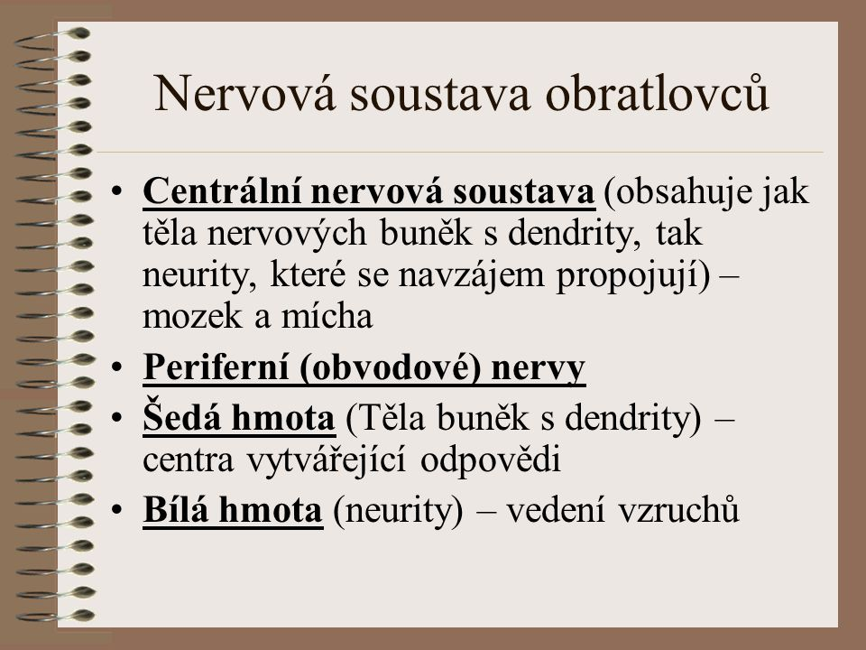 Nervová soustava obratlovců Centrální nervová soustava (obsahuje jak těla nervových buněk s dendrity, tak neurity, které se navzájem propojují) – moze