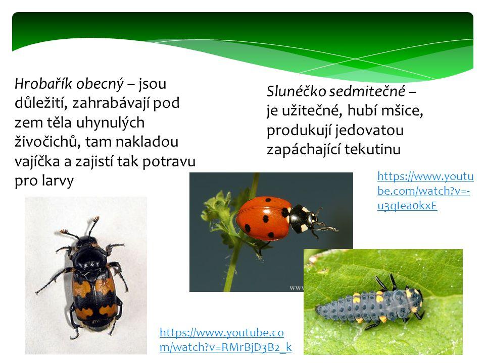 Hrobařík obecný – jsou důležití, zahrabávají pod zem těla uhynulých živočichů, tam nakladou vajíčka a zajistí tak potravu pro larvy Slunéčko sedmitečn