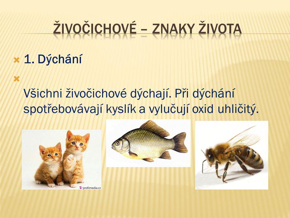  1. Dýchání  Všichni živočichové dýchají. Při dýchání spotřebovávají kyslík a vylučují oxid uhličitý.