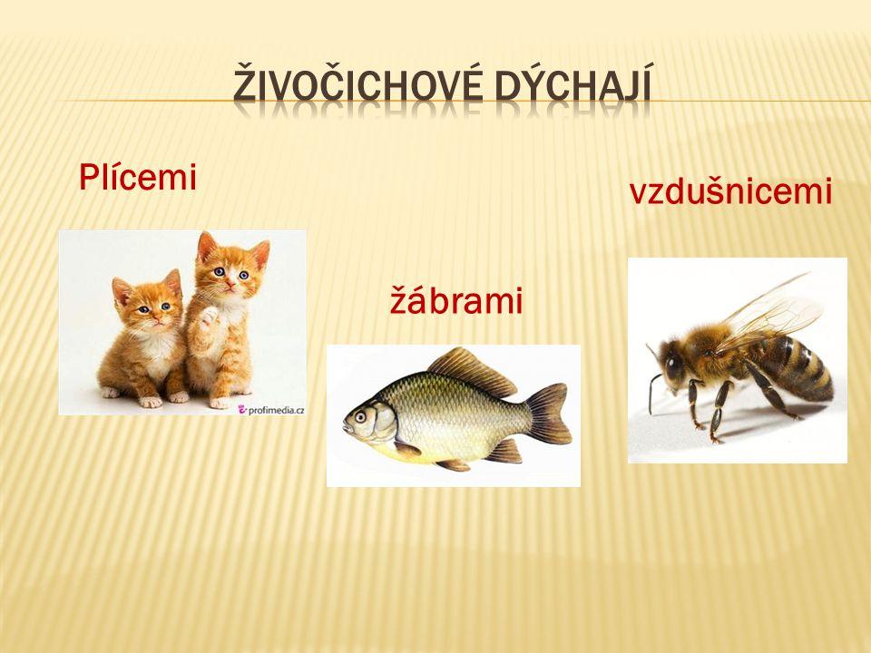  2.Přijímání vody a potravy  Všichni živočichové přijímají vodu a potravu.