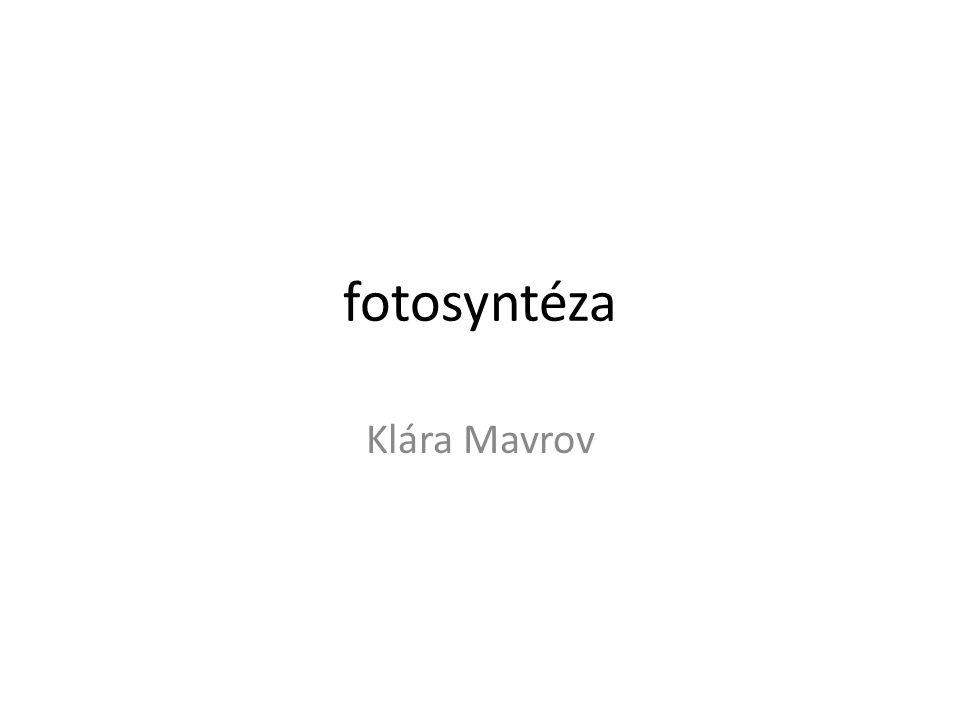 fotosyntéza Klára Mavrov