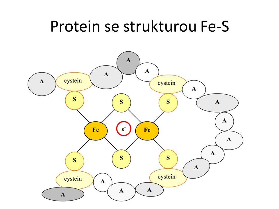 Protein se strukturou Fe-S