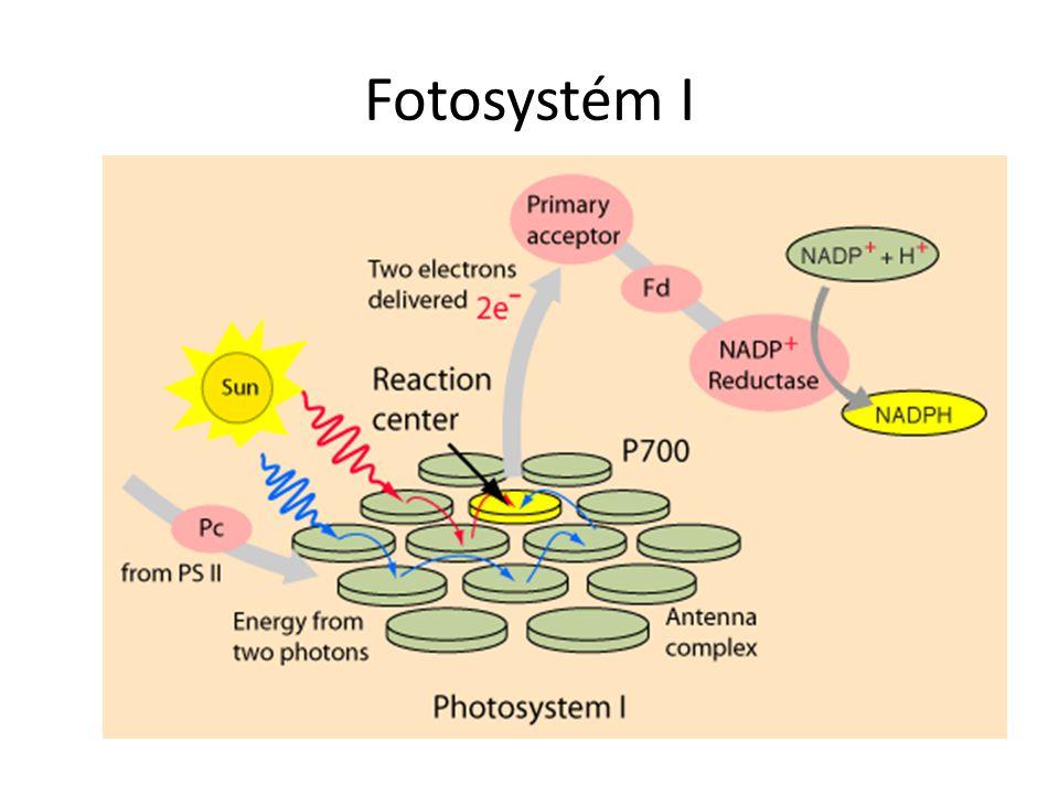 Fotosystém I