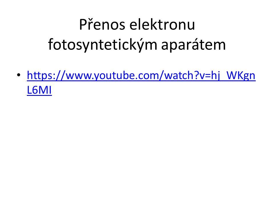 Přenos elektronu fotosyntetickým aparátem https://www.youtube.com/watch?v=hj_WKgn L6MI https://www.youtube.com/watch?v=hj_WKgn L6MI