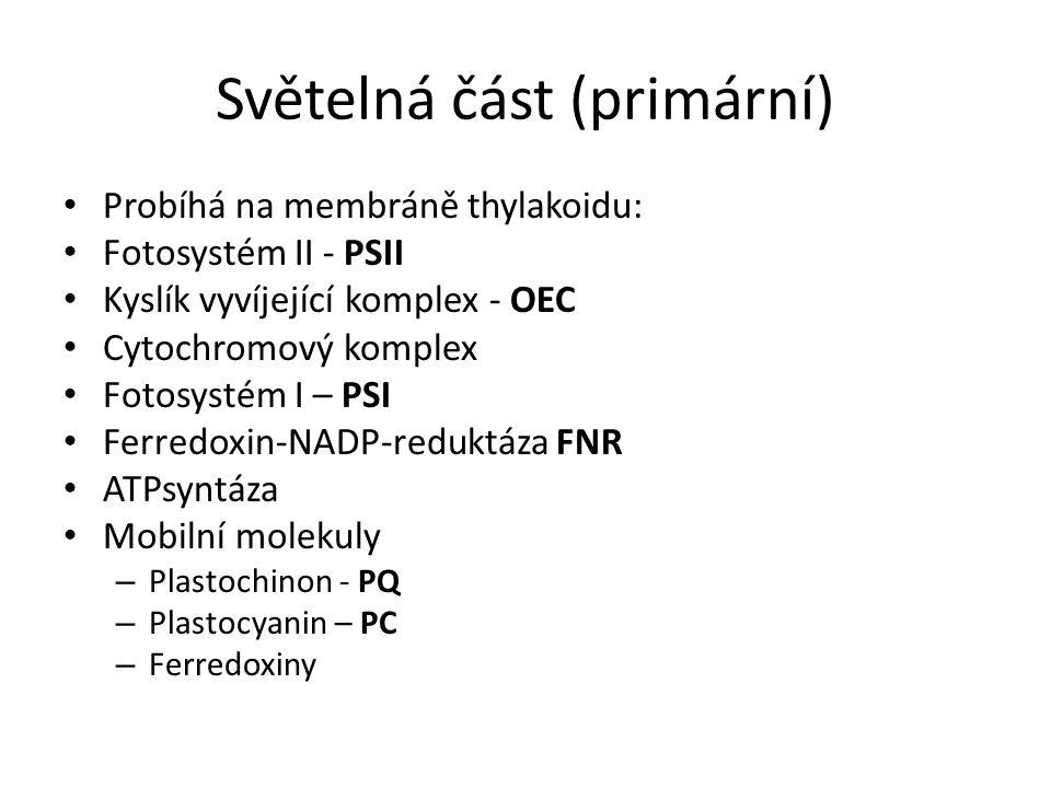 Světelná část (primární) Probíhá na membráně thylakoidu: Fotosystém II - PSII Kyslík vyvíjející komplex - OEC Cytochromový komplex Fotosystém I – PSI