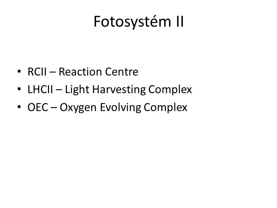 Fotosystém II RCII – Reaction Centre LHCII – Light Harvesting Complex OEC – Oxygen Evolving Complex